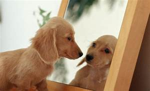 Animals vs Mirrors Compilation 2013 [HD] - YouTube