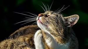 Flöhe Bei Katzen Bekämpfen : fl he bei katzen was hilft ~ Orissabook.com Haus und Dekorationen