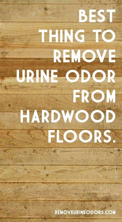 Urine Odor Hardwood Floors by How To Remove Urine Odor 10 Handpicked Ideas To Discover