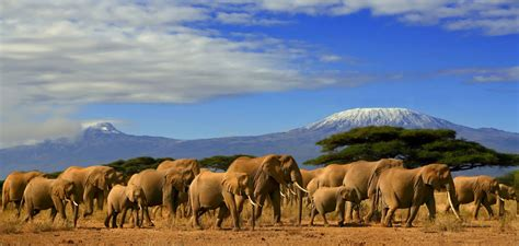 Best Safaris In Kenya Amboseli National Park Kenya Safari Abana Safaris