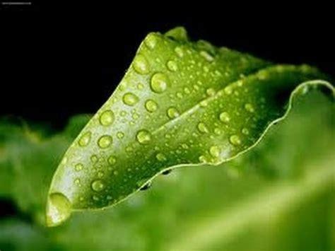how why dew drops happen makemegenius one of