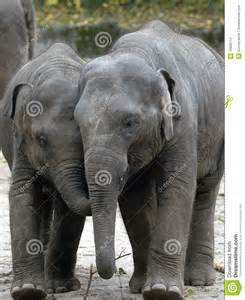Baby Elephant Holding Tail