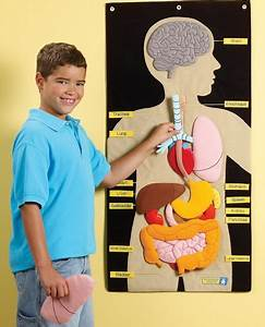My Body Activity Center  Human Parts For Kids