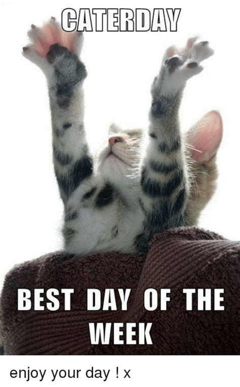 Meme Of The Week - caterdav best day of the week enjoy your day x meme on me me