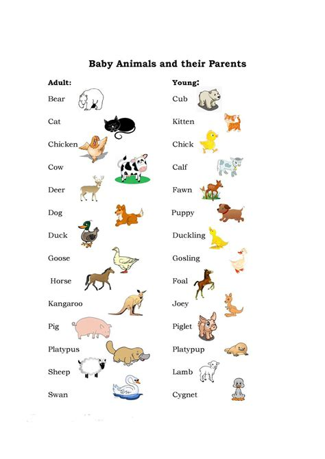 animals class 1 olympiad made easy