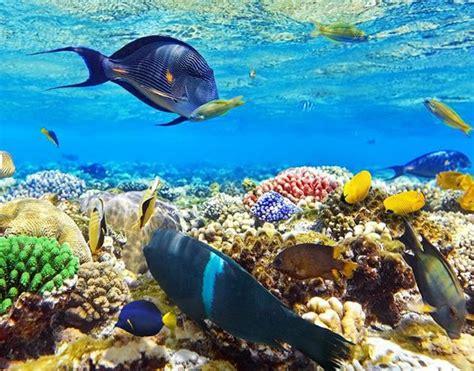 kanaio coast snorkeling blue water rafting turtles fish