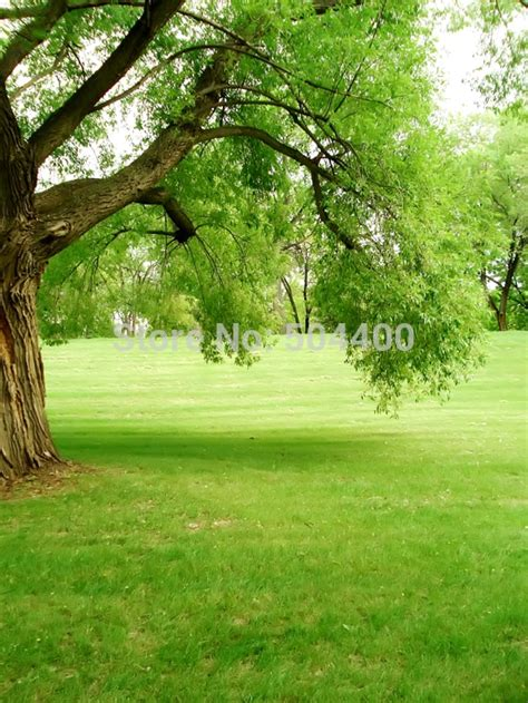 Tree Photo Backdrop 5x10ft flowers photo background trees garden loft wedding
