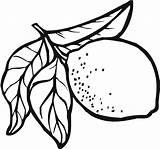 Lemon Coloring Getdrawings Meringue sketch template