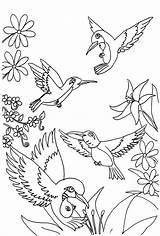 Coloring Hummingbird Pages Printable sketch template