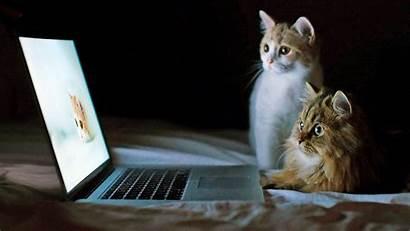 Funny Desktop Animal Wallpapers Laptop Animals Cat