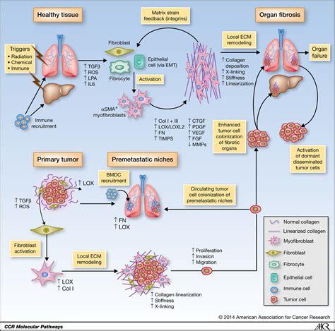 molecular pathways connecting fibrosis  solid tumor