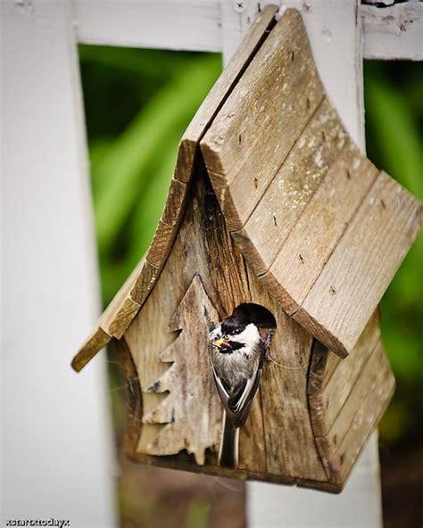 chickadeebirdhouseplans  chickadee bird house houses plans designs bird house kits