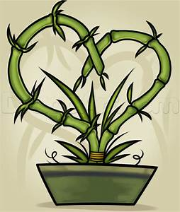 How to Draw a Bamboo Plant, Step by Step, Trees, Pop ...