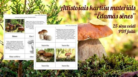 SĒNES: Ēdamās sēnes, PDF, LV in 2020   Pdf