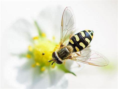 wie vertreibe ich wespen wespen hummeln bienen wer ist wer 246 koleo umwelt und naturschutz f 252 r kinder in hessen