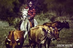 Cowboy Catching Calves