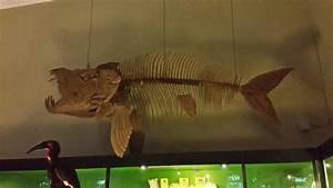 flying fish - Picture of Batu, East Java - TripAdvisor