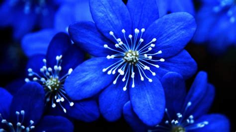 Beautiful Blue Flower Weneedfun