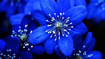 June Magic Flowers Something Represents Bride Couple