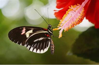 Butterflies Fun Facts Discover Fluttery Butterfly Philippines