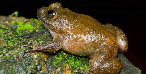 Scientists discover 12 new frog species in India - DAWN.COM