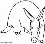 Aardvark Coloring Print Animal Pages Drawing Anteater Views Printable Armadillo Clipart Drawings Freekidscoloringpage Cartoons Total sketch template