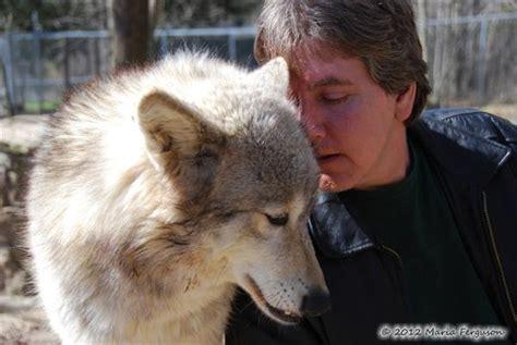 birthday cuddling wolf picture