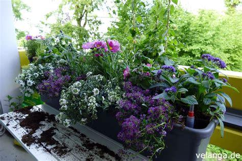 Gemüse Im Balkonkasten by Einen Balkonkasten Sommerlich Und Bienenfreundlich