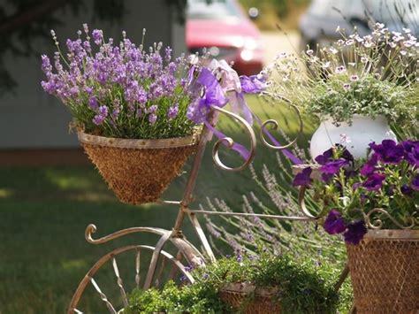 lavanda in vaso coltivazione lavanda giardinaggio coltivare la lavanda