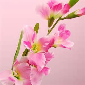 Pink Cabinet by Futaba Sousyoku Rakuten Global Market Gladiolus