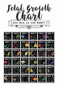 Baby Fruit Growth Chart Fetal Growth Chart 20 30 Weeks Baby Fetal Growth Chart
