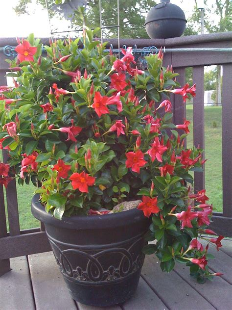 Container Gardening Ideas Pinterest Photograph  Container G