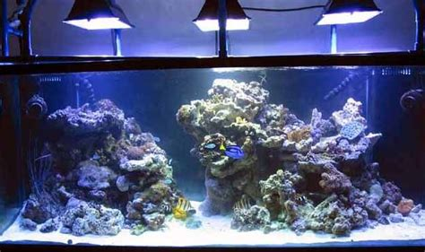 Simple And Effective Guide On Reef Aquascaping  Reef Tank