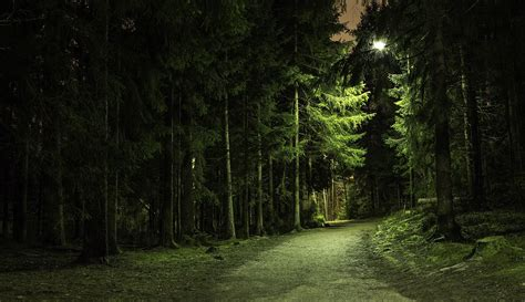 Night Forest Wallpapers High Quality