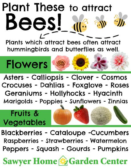 plant these to attract bees sawyer garden center