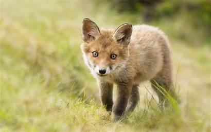 Fox Wallpapersafari Code