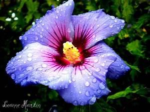 Beautiful Raindrops On Flower by LeeLovesDoodling on ...