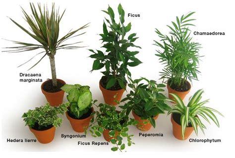 Le Uv Plante Interieur jardinage d int 233 rieur tout savoir sur les jardins d