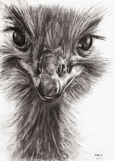 animals charcoal drawing  behance