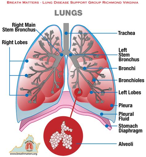 quotes  breathing  lungs quotesgram