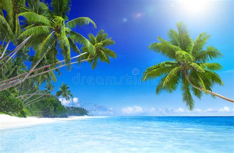 Tropical Paradise Beach With Palm Tree Stock Photo Image