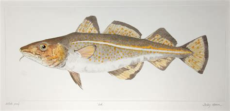Salt Water Fish (uk) Medium Prints Hand Coloured