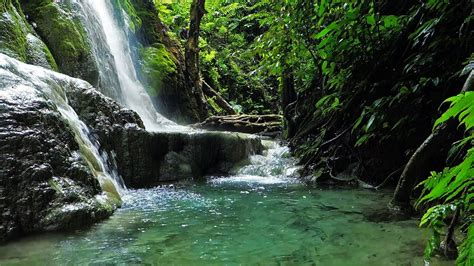 jungle waterfall  full hd remake  forest spray youtube