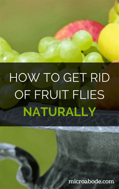 How To Get Rid Of Fruit Flies Naturally (step By Step. Tv Storage Units Living Room Furniture. Living Room And Kitchen Ideas. Grey Living Room Interior. Best Paint Colors For Small Living Rooms. Living Room Bike Rack. Modern Curtain Designs For Living Room. Apartment Living Room Pinterest. Black White And Silver Living Room