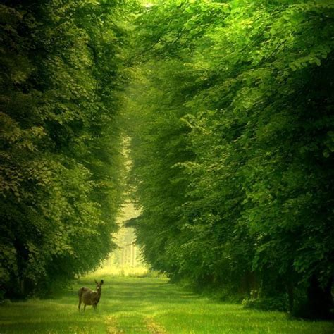 beautiful forest the most beautiful forests of europe part one enjoy your holiday
