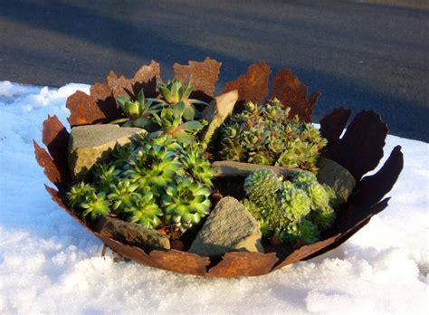 Winterharte Gartendeko by Edelrost Deko Schale Bepflanzt Mit Sempervivum Pflanzen