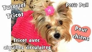 Video Pour Chien : tutoriel tricot pull pour chiens avec aiguilles circulaires youtube ~ Medecine-chirurgie-esthetiques.com Avis de Voitures