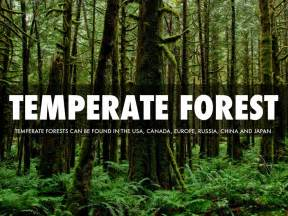 Temperate Forest By Samuel Diaz