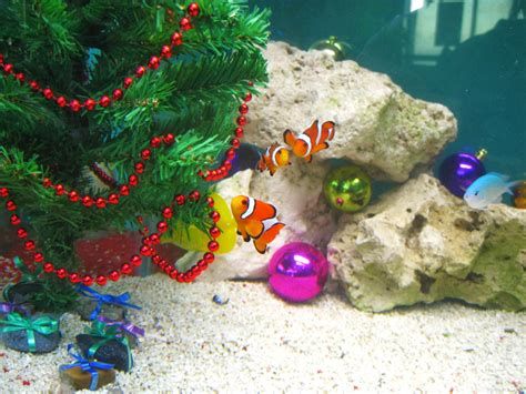saltwater fish tank xmas decorations  fish tank