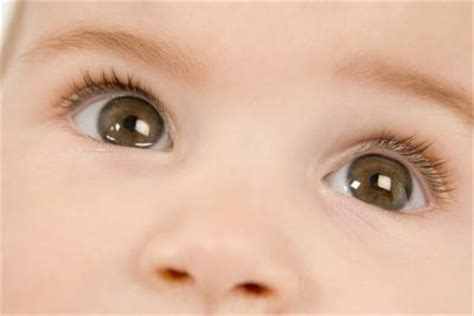 infant eye color how to calculate the probability of a baby s eye color